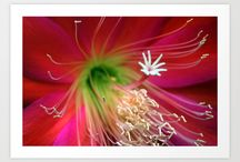 Cool Flowers / Cool flower pictures