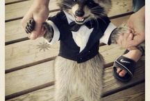 Funniest animals in clothes / Funny animals in clothes