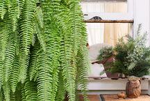 Planten / Binnen en buiten