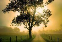 nature :)