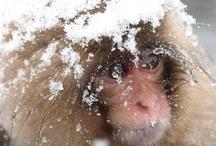 Keep Calm and OMG Monkey !!!