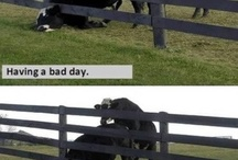 Having A Bad Day!?