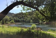 Marin Hikes / My favorite hikes in Marin County, California