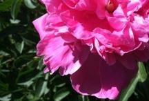 weed my garden / good plants to put in your garden