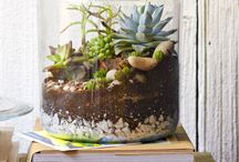 fairy garden & terrarium / by Janet Underwood
