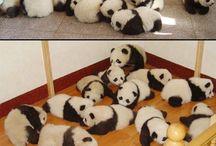 CUTE BABY ANIMALS!!!!!!