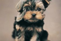 Great Dog Info / Helpful articles and information about dogs and their care