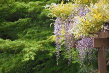 Plantes de jardi