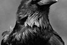 The Crow / The Raven