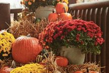 fall decor / by Judy Gibson