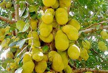 frutas tropical