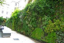 murs végétalisés extérieurs