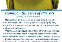 Parrot information
