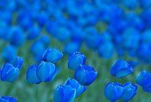 Cobalt Blue / ♥  All Things Cobalt Blue!  ♥ / by Jan Stevens