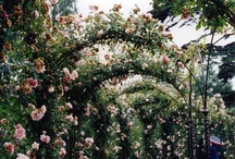 Country Gardens... / by Barbara Jackson