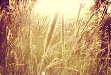 |  Summer  |