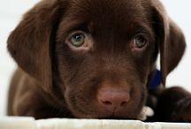 Doggies! / by Nikki Coffey