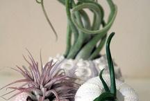 Christian-fleurs / Naturel