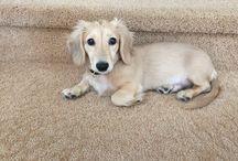 Puppy-charm