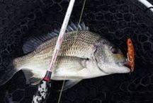 Barramundi Fishing Techniques for Beginners