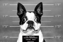 Pet photos that inspire us