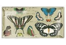 Butterflies Galore / All about butterflies