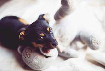 Hunde-Erziehung / Infos und Tipps zur richtigen Hundeerziehung und zum Training für deinen Liebling