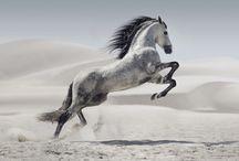 cheval désert
