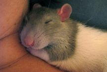 Pets <3 / Pugs + rats