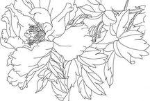 рисунки (цветы)