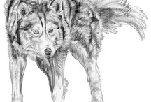 WOLVES / by Charlie Shin