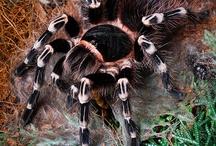 Vogelspinnen/Skorpione