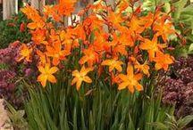 Blütenherz / Es blüht im Garten, auf den Wänden und auf Papier