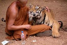 Animals have Soul