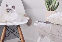 Interieur katten