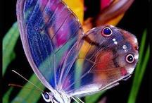 17 Butterfly - Vlinders