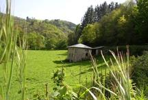 Turismo rural Asturias / Todo lo que te puede ofrecer el Occidente de Asturias. Naturaleza en estado puro aún por descubrir.