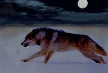 samurai riding wolf