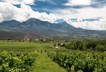 Winery - Terror Creek Winery