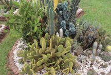 Jardín tunquen