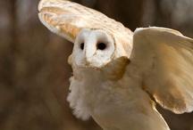 Owlz / by Angela Henderson