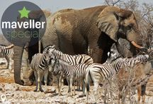 Best places for wildlife / discover • pin • travel! What are the best places to see loads of wildlife? Here is a selection of our Maveller specials. Have suggestions? Let us know: info@maveller.com