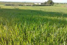 Le stagioni del grano