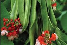 Legumes! / by Stephanie Jones