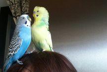 koko& kara ♡ / My parakeets