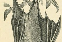 I. LOVE. BATS!!!! / by Micehell Ferri