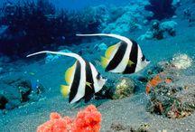 Peixes lindos
