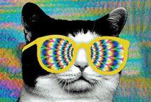 Cats 1