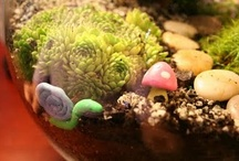 Home-Terrariums, Fairies & Gnomes / by Brenda Mulhausen
