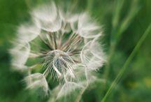 My Lensbaby photos